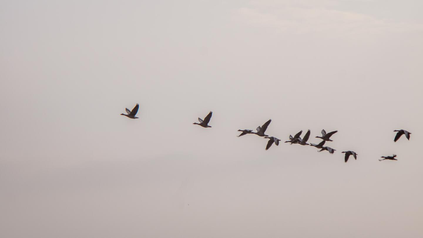 What are the 7rs of an application migration?